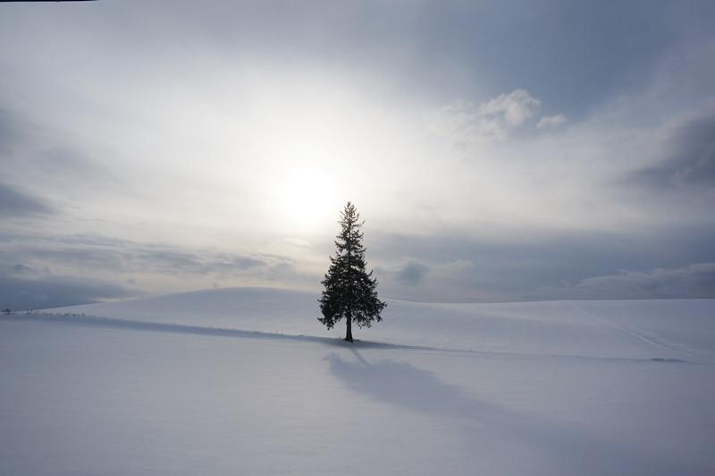 [冬 北海道] 冬日浪漫 美瑛雪景