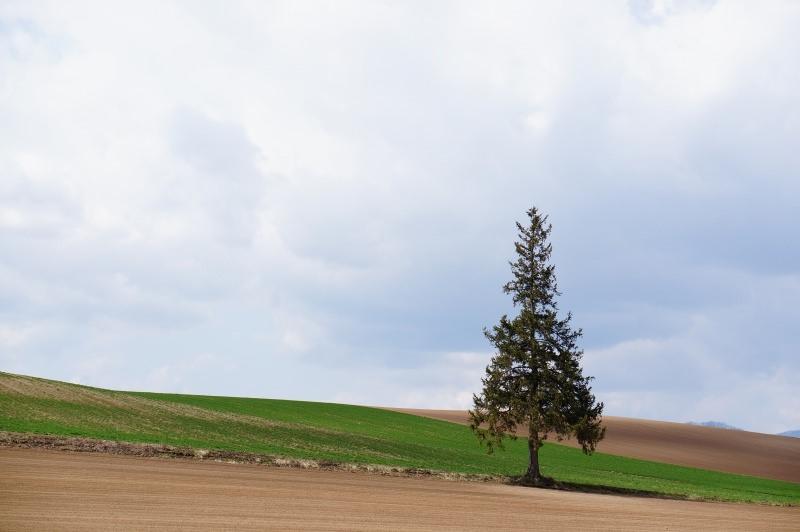 [北海道] 春遊美瑛 重返 クリスマスツリーの木