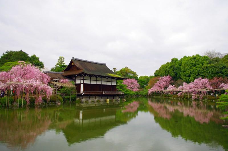 [2013花見] 京都 – 平安神宮 神苑拝観 岡崎疏水
