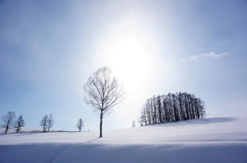 [冬 北海道] 二訪 冬日美瑛 夢幻雪色